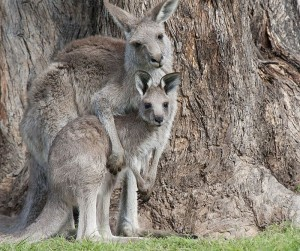 mum and baby 2